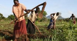 paysanne afrique