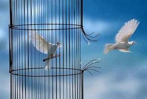 les-oiseaux-quittent-la-cage
